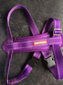 Ezy Dog harness in purple - medium