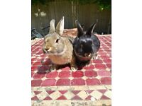 tow very cute and cuddly male rabbits