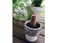 Outdoor/ indoor glass plant watering waterers sphere globes x8