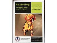 Dog Walking by Marathon Dogs