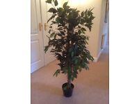 ARTIFICIAL INDOOR FICUS TREE