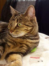 Missing female cat Hartlepool £100 Reward for safe return