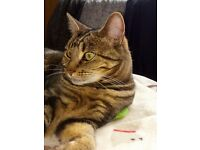 Missing female cat Hartlepool £100 Reward for safe return