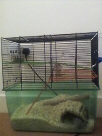 Female gerbil girls and cage