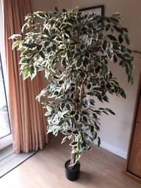 Artificial large variegated fig tree