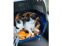 11 week old kitten