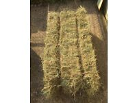 Small Hay Bales - Ragwort Free Top Quality Meadow Hay