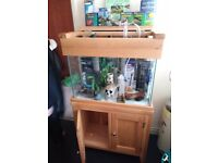 100 ltr tank, aqua oak surround, absolute perfect condition, lots of extras to much to list