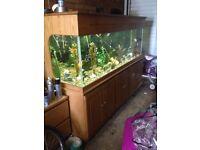 Fish tank and unit