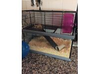 Two Gerbils for sale with cage, ball & sawdust