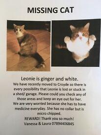 Missing Ginger and White female Cat