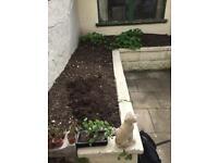 Garden Soil, compost