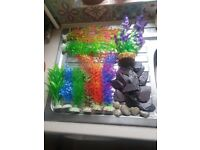 Interpet 64l fish tank with extras