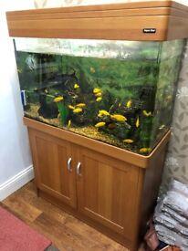 Aqua one 4ft fish tank with fish