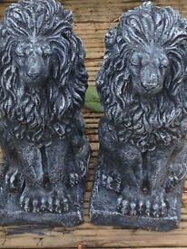 Gorgeous pair of sitting lions