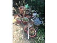 Free Plant Pots
