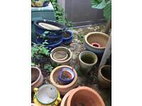 Large terracotta garden pots