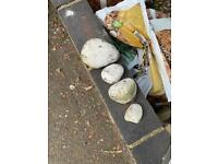 White rounded pebbles