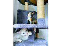 One lovely kitten