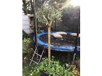 X2 Olive trees (standard)