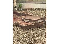 FREE Paving slabs 60x60cm