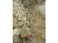 Rockery Stones x8 Pick-up only Barnsley