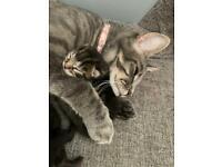Cute Chunky Kittens