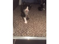 3 Kittens available looking for loving family home
