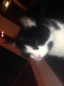 3 yr old female cat!