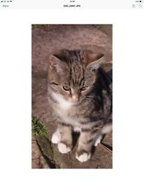 Ready to go to new home. Lovely,healthy,playful ,tabby kitty