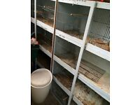 QUICK SALE breeeding cages