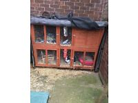 For sale Rabbits and Hutch