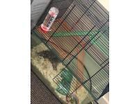 1 Male Roborovski Hamster