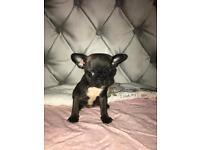 Two beautiful girl Frug puppies For sale
