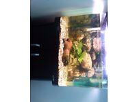 Fish tank aqua one 62 L ,very good condition