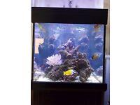 Aqua One 275 Marine Tank Aquarium Fish Tank Complete Set Up Marine Fish Live Rock RO Filter Reef