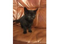 Kittens - 2 male and 3 female