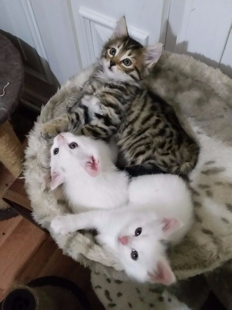 Adorable, playful & very cute kittens