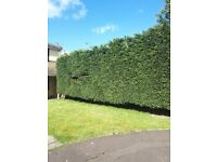 Hedge master gardening services
