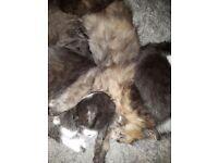 Playful 6 kittens