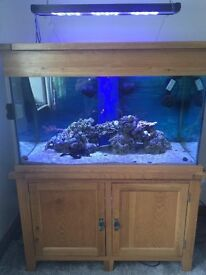 Brand new 4x2x2 ft solid oak wood marine tropical cold water fish tank i with setup delivery