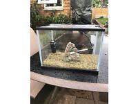Small tropical fish setup