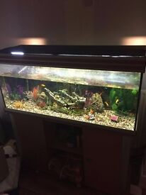 4ft large fishtank/aquarium on cupboard stand £225 includes large filter and accessories ono