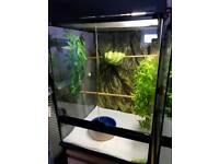 green tree python and full setup
