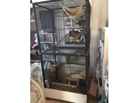 Tall cage with 4 levels ideal for chinchillas etc