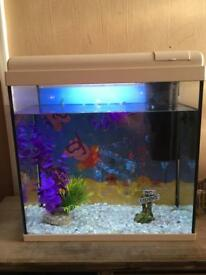 Peppa pig fish tank