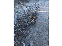 Dog walking & home boarding