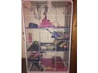 3 female rats for rehoming with set up e.g. Cage, food and content of cage