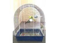 Hi I have 4 birds with beautiful cage only £100