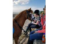 11h-11.2h lead rein pony with potential